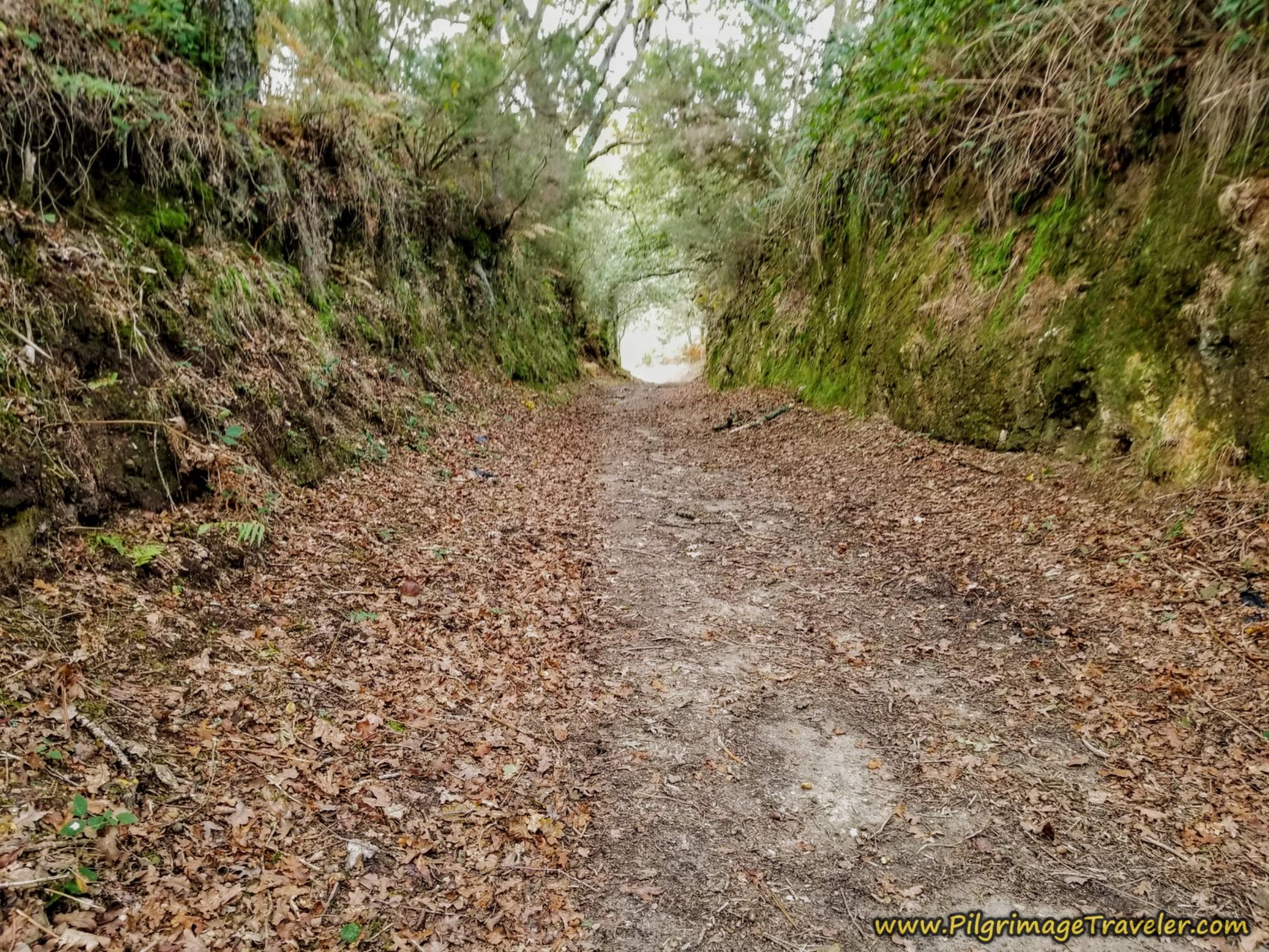 Deeply Cut Road