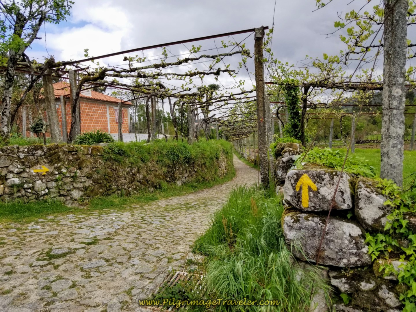 More Grape Arbors and Cobblestone on day eighteen on the Central Route of the Portuguese Camino