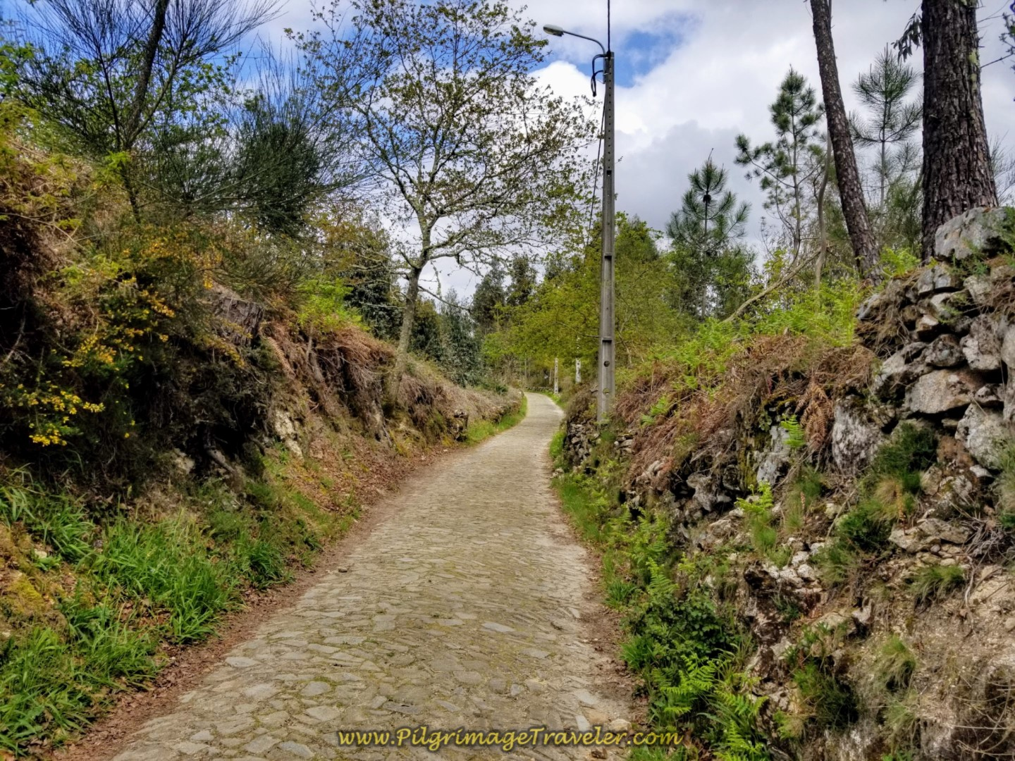 Captivating section of real cobblestone on day eighteen on the Central Route of the Portuguese Camino