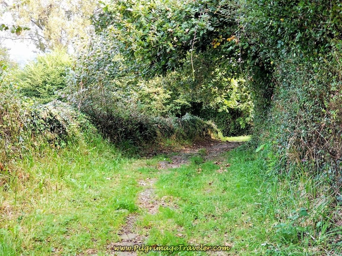 Shady Roman Road