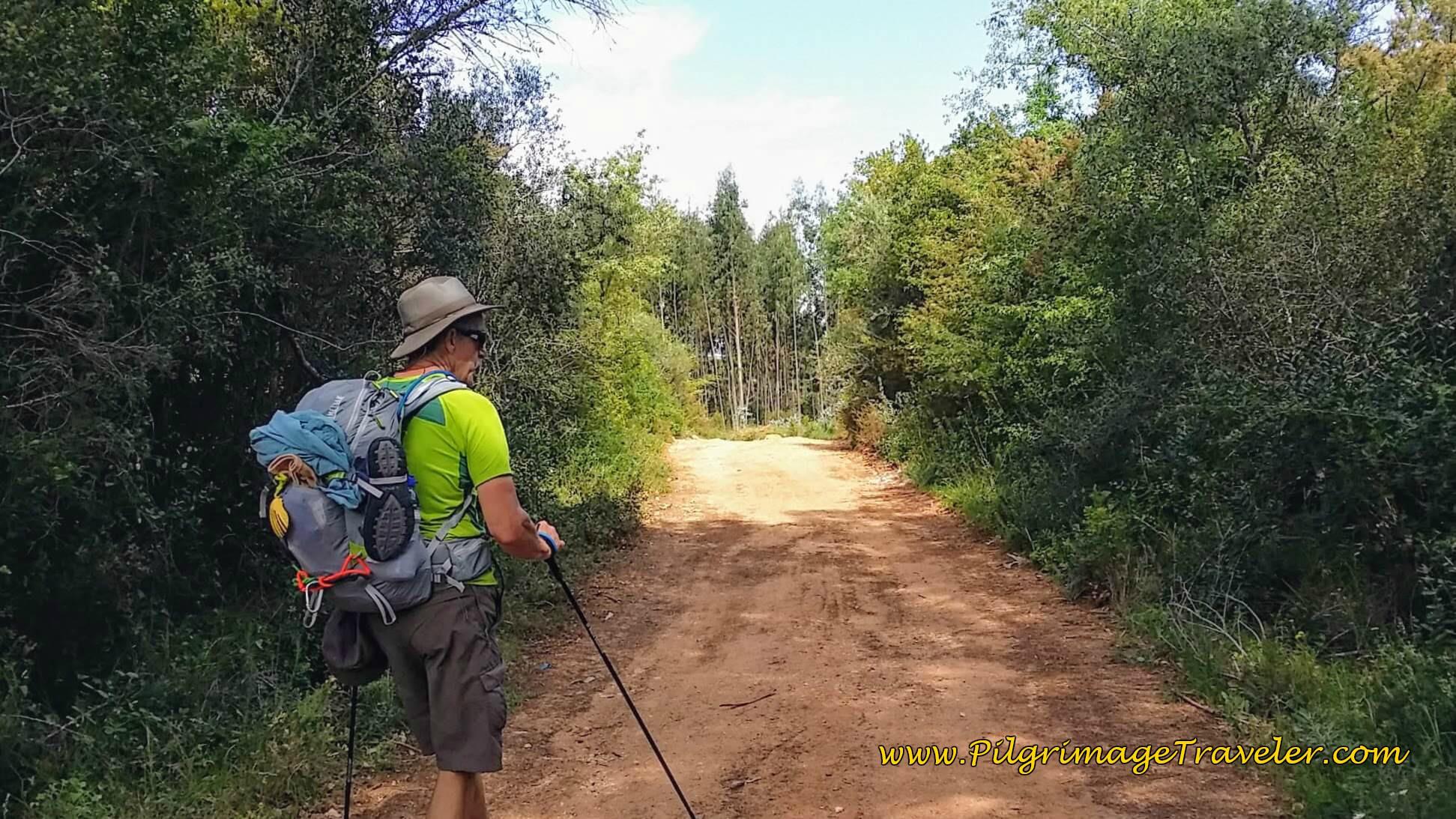 Entering Forest Toward Conimbriga