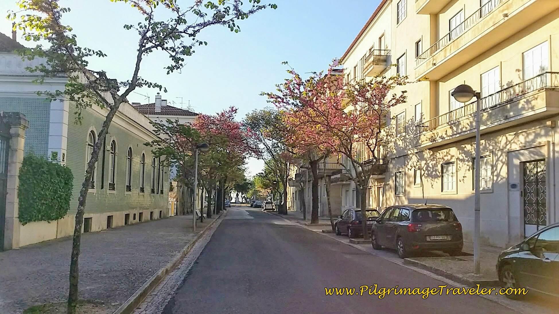 Approaching the Portas do Sol on the Avenida 5 de Outubro, Santarém, Portugal