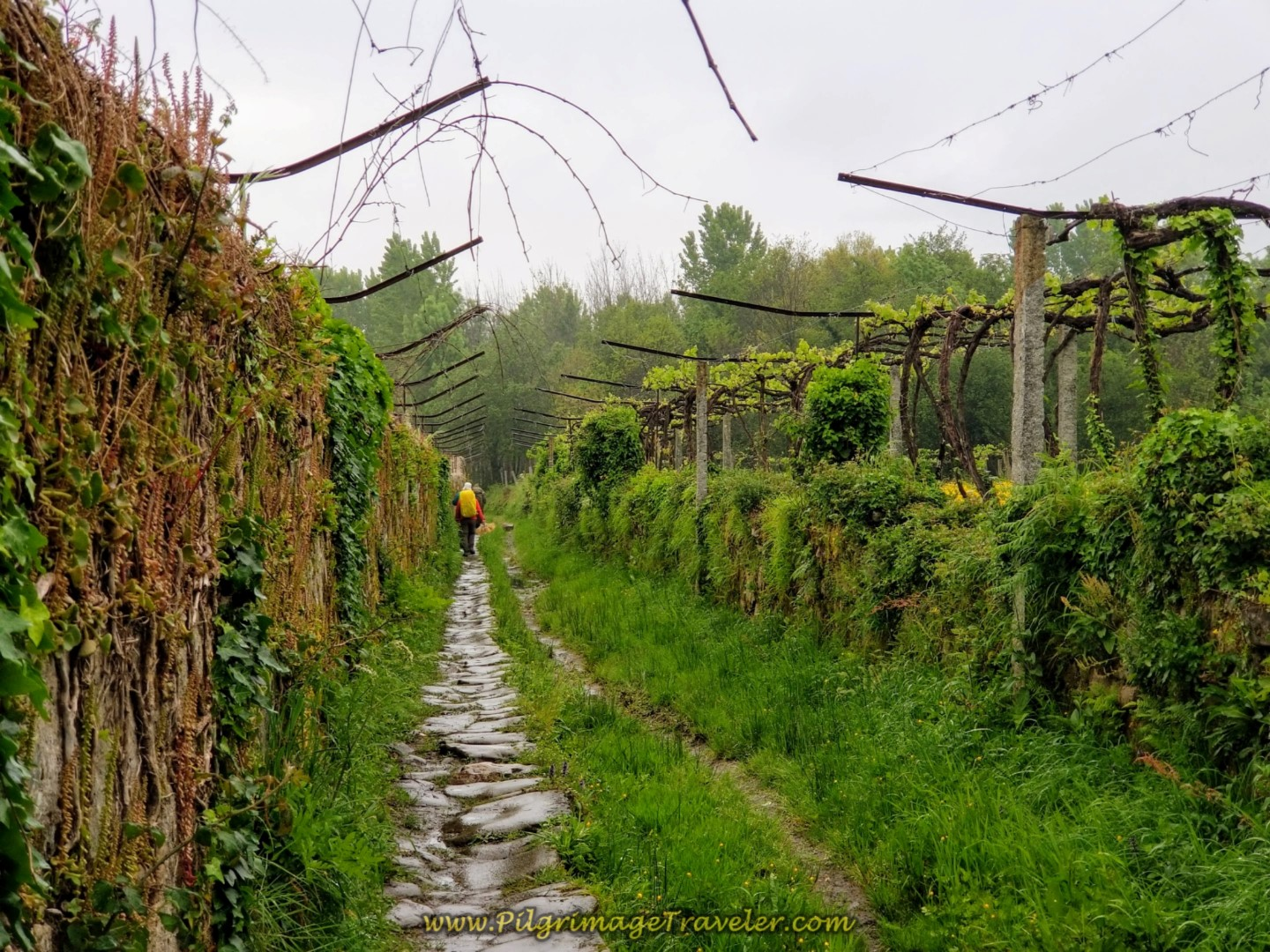 The Stone Path Leaves the Canal on day eighteen on the Central Route of the Portuguese Camino