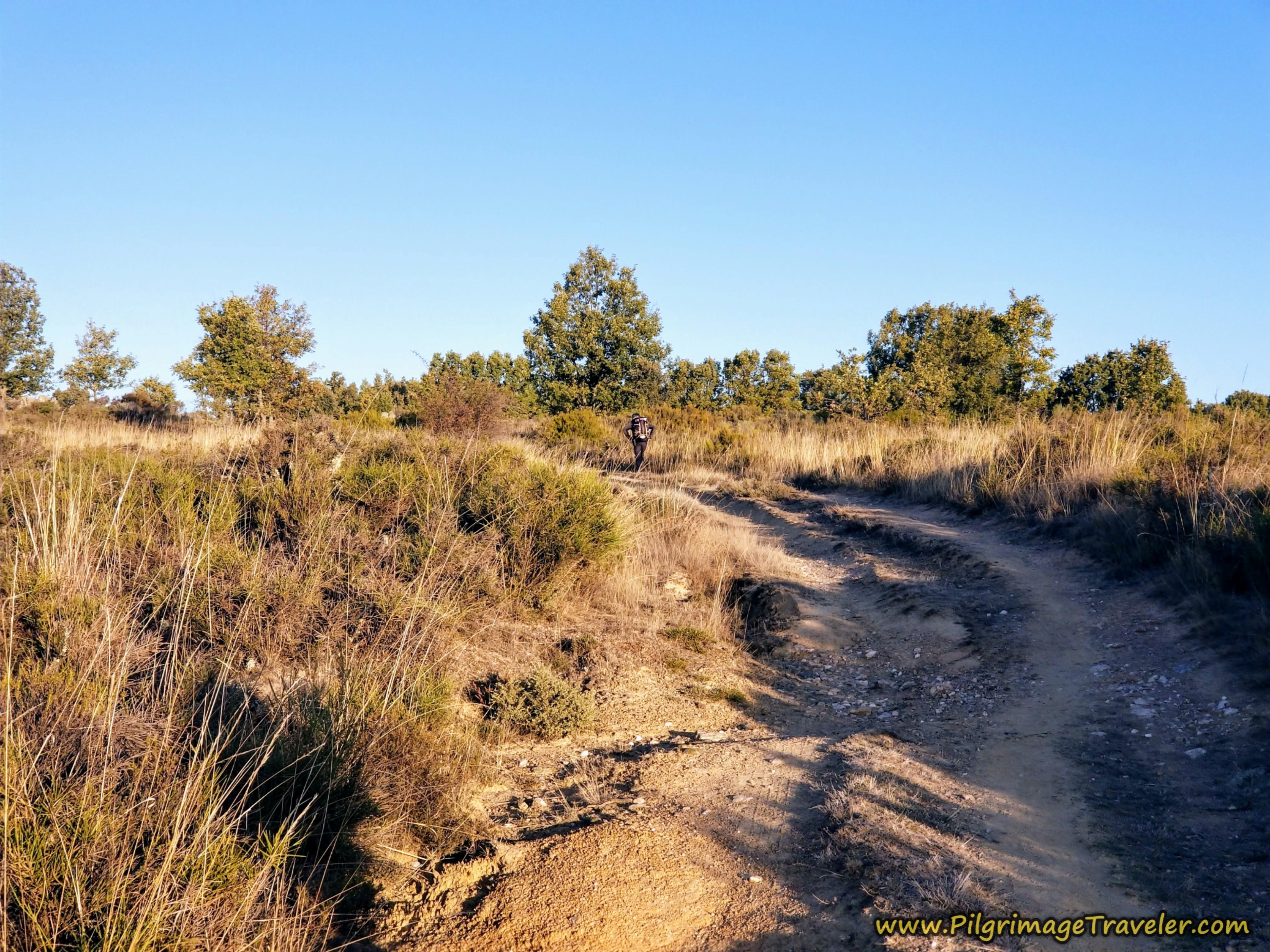 Peregrino Negotiates Rougher Road Ahead on the Camino Sanabrés from Rionegro del Puente to Entrepeñas