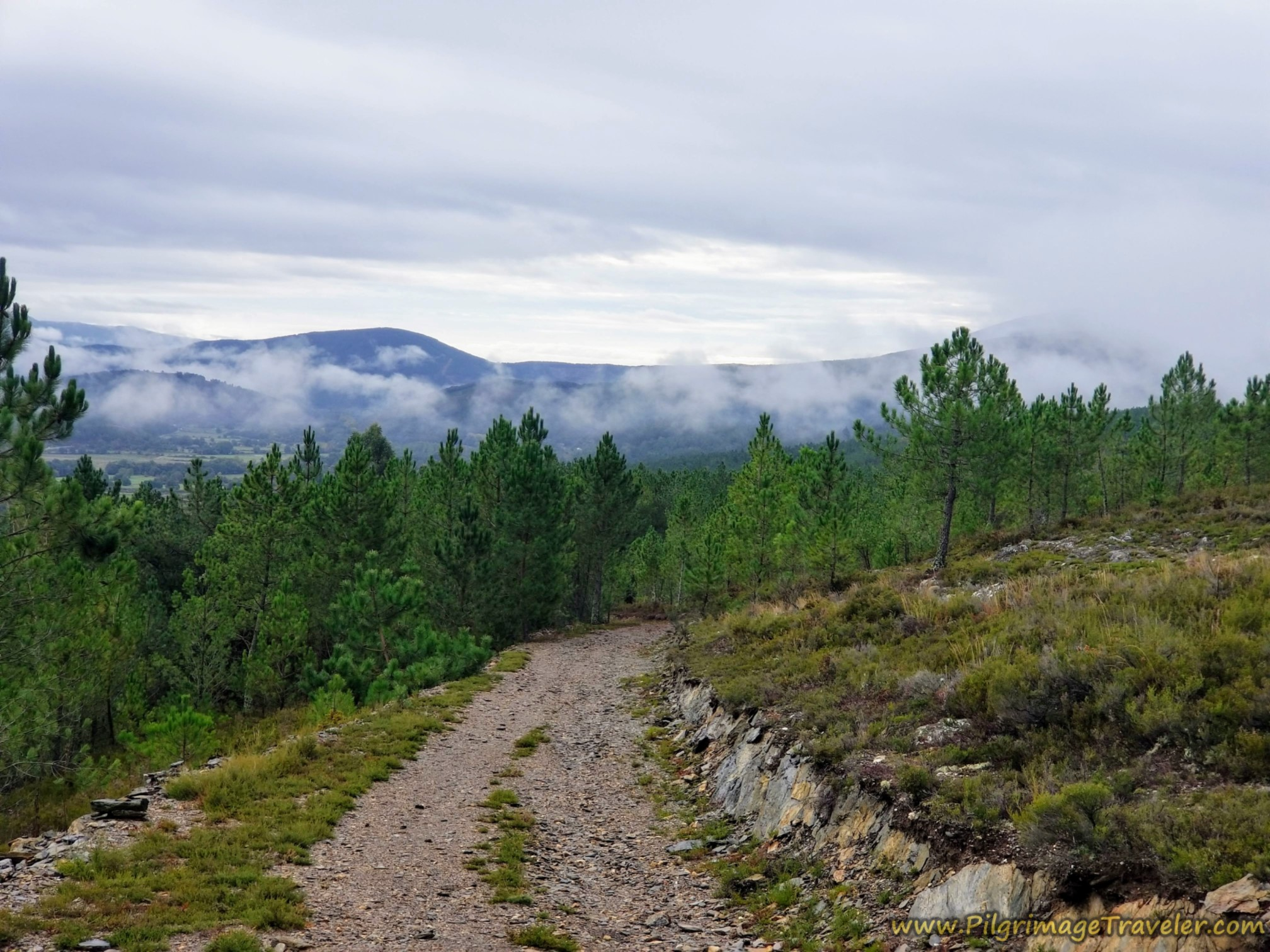 Galician Mountains and Pine Forest
