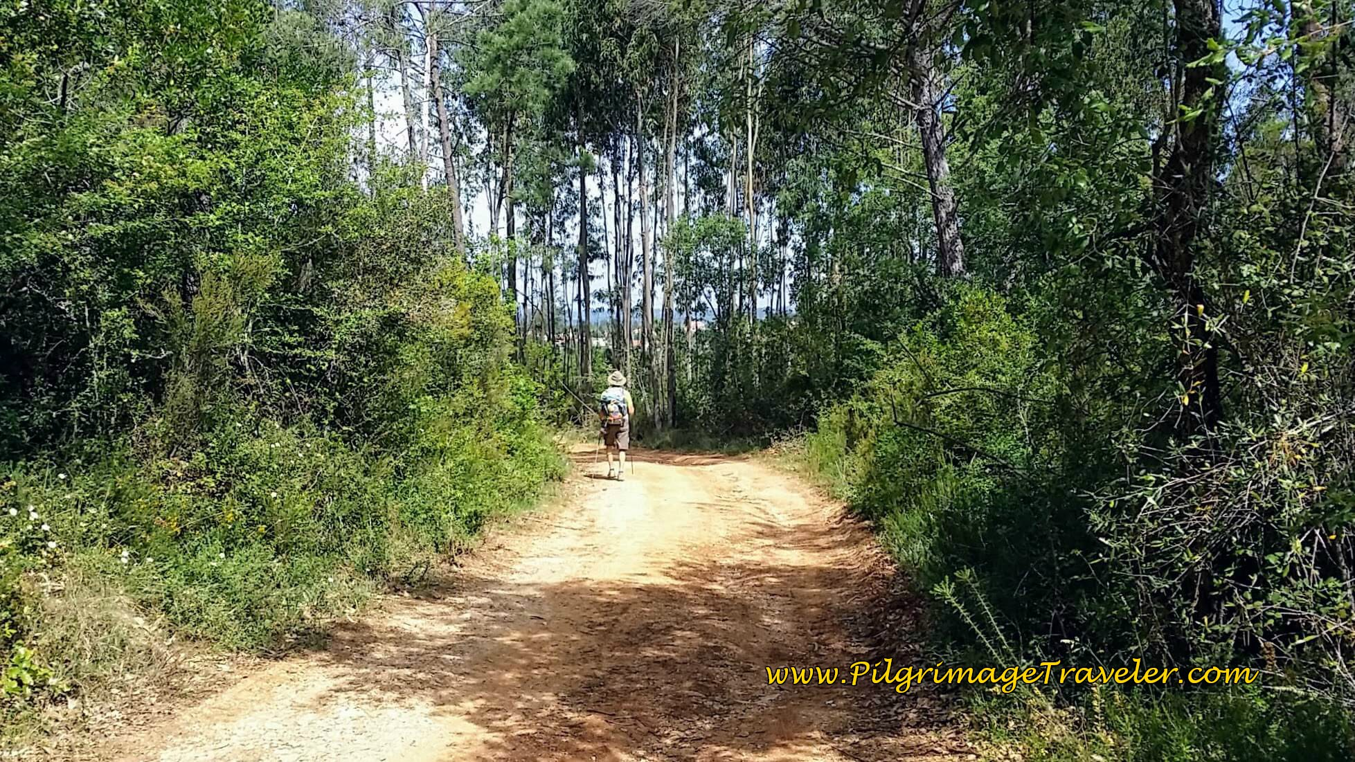 Onward on the Forest Road - Conimbriga is Near