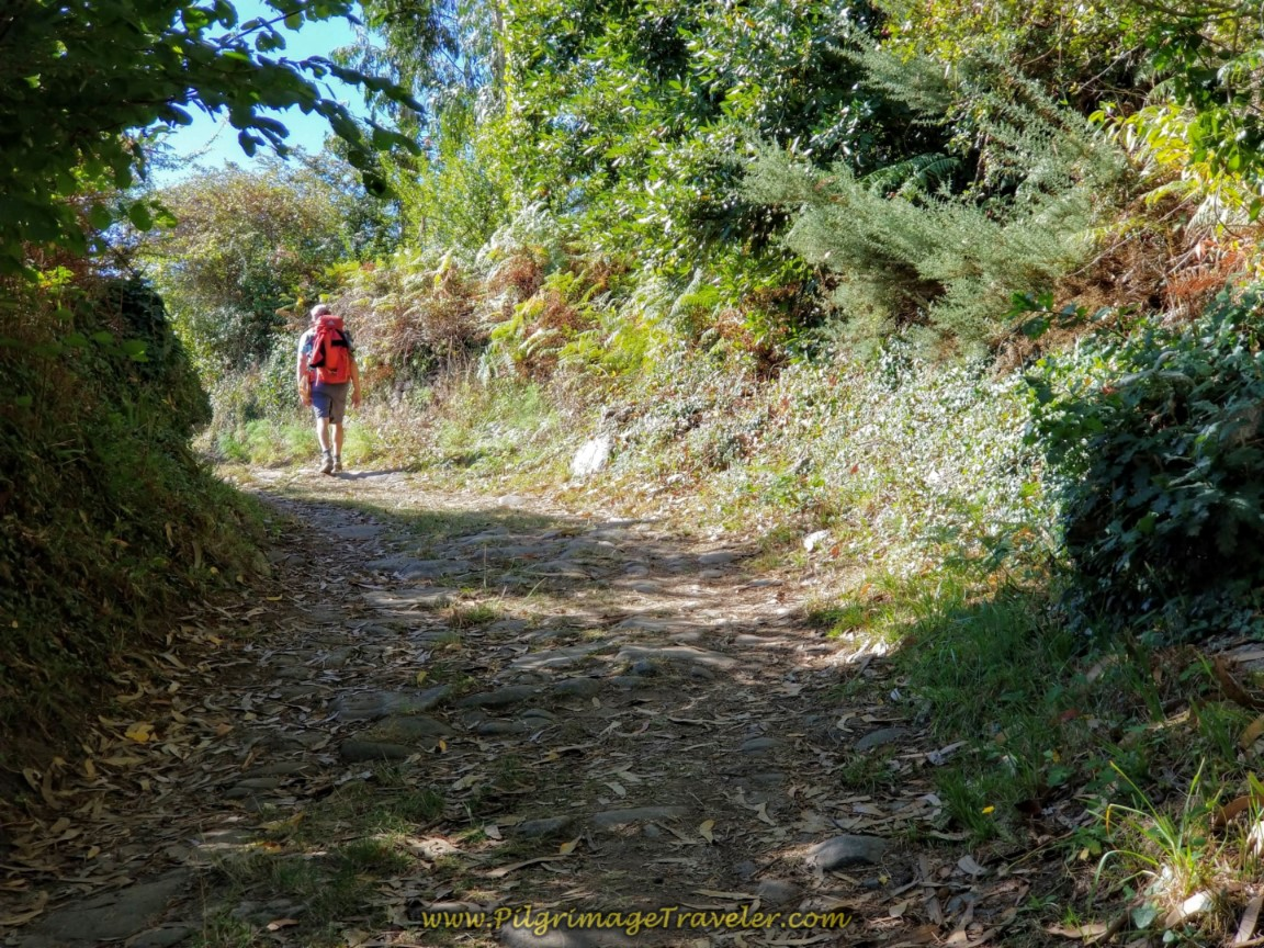 Uphill on Forest Path