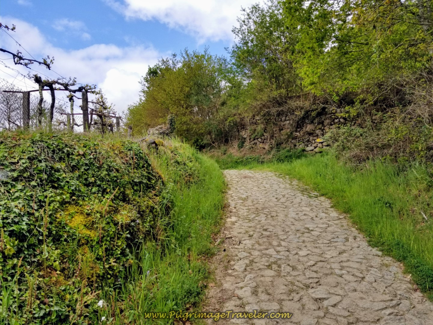 Up the Hill on More Cobblestone on day eighteen on the Central Route of the Portuguese Camino