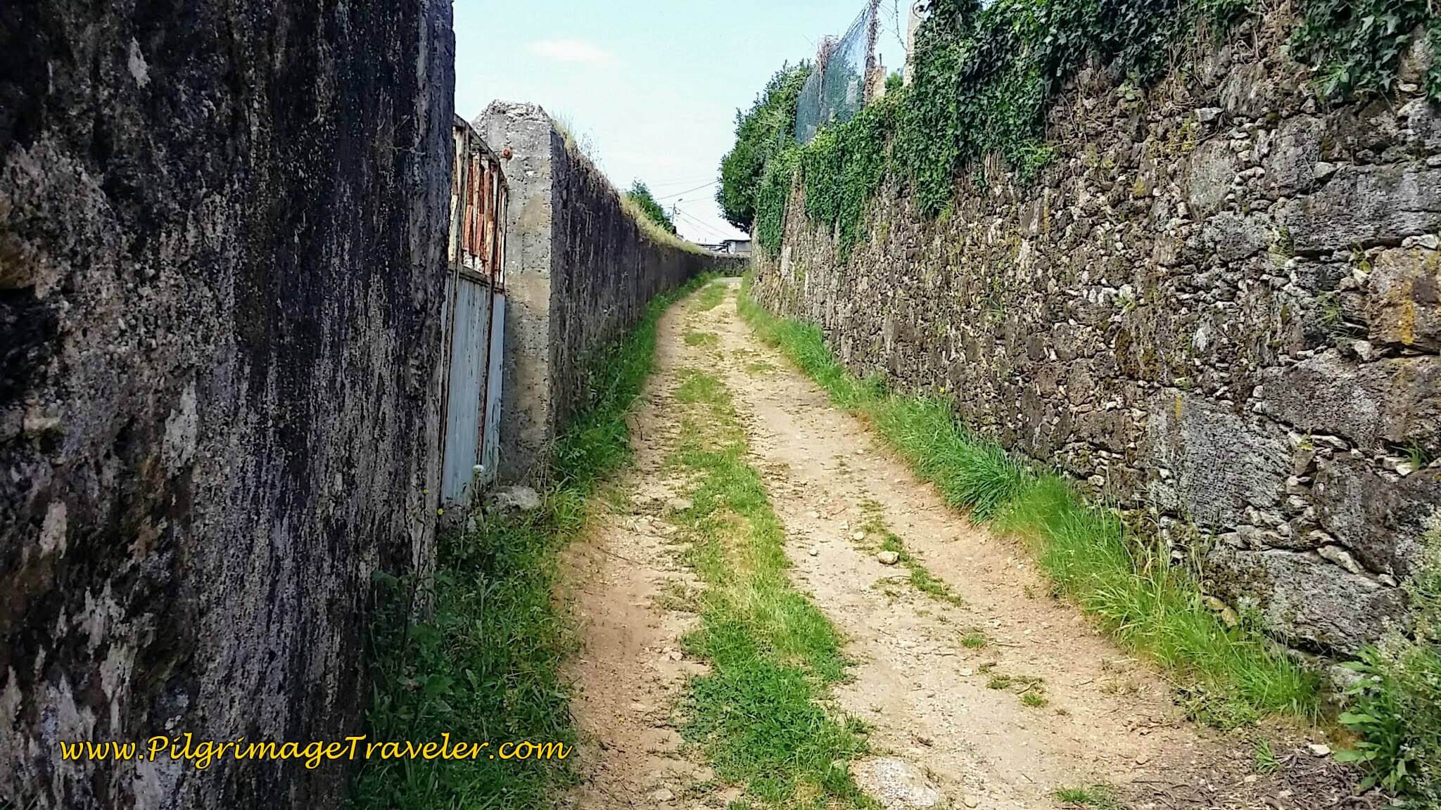 Briefly Turns to this Lane on day thirteen of the Portuguese Camino