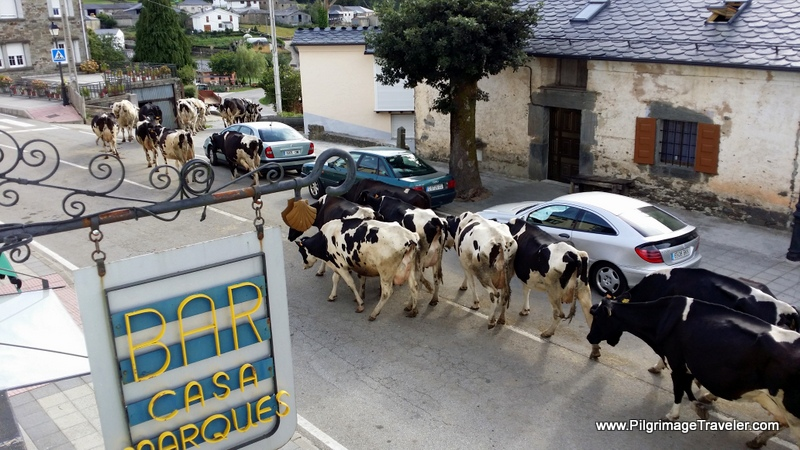 Cattle Drive Thru Town - Seen From Our Hotel Window