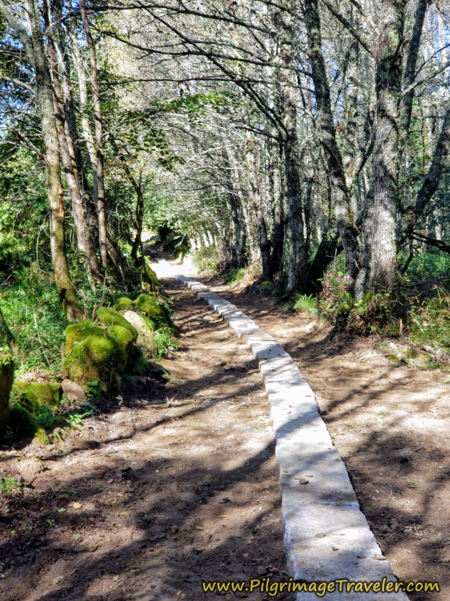 Improved Path Through More Forest