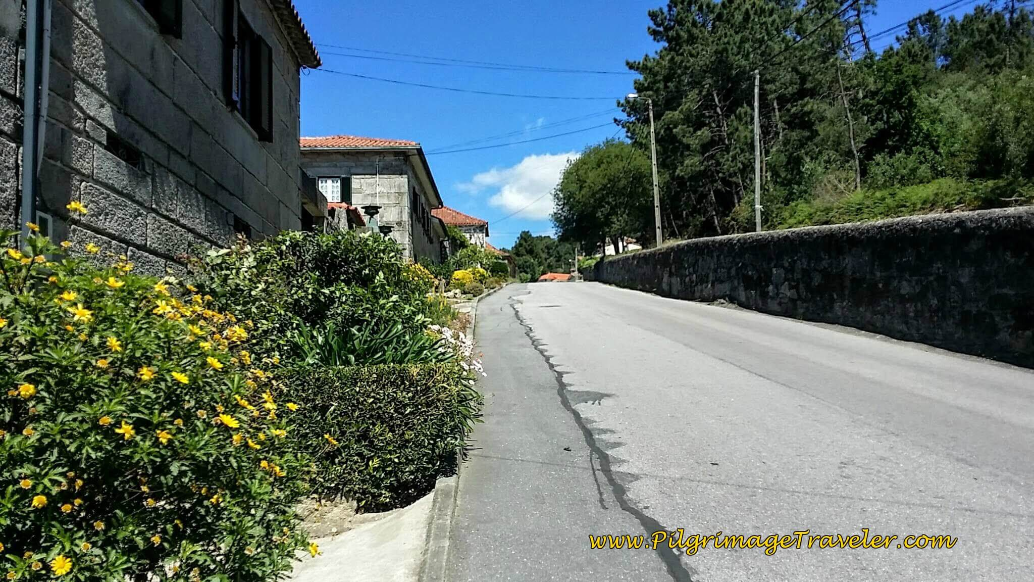 Up the Hill on the Avenida da Estrada Real on day seventeen of the Portugese Way