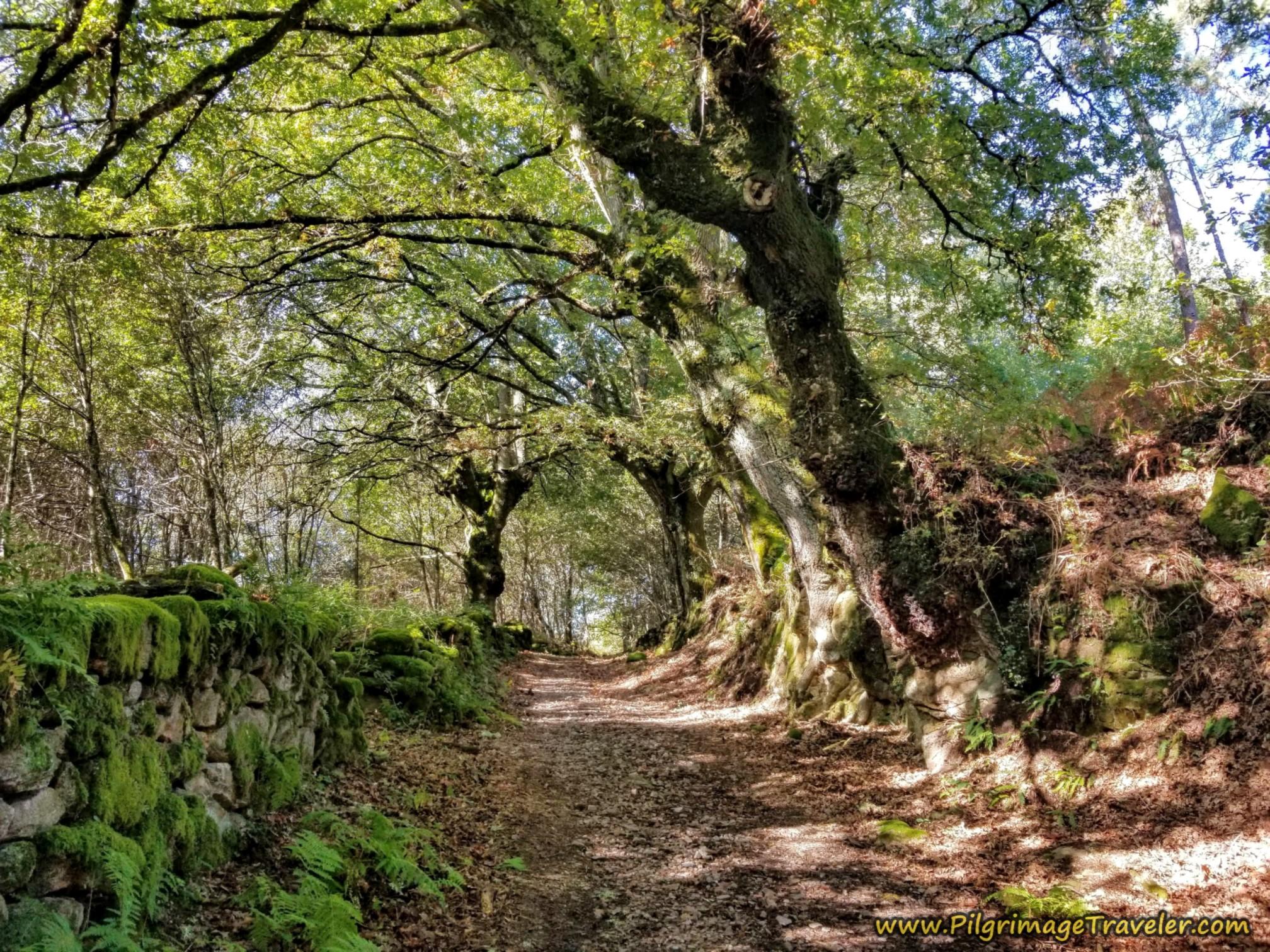 Forested Walk Toward Casas Novas
