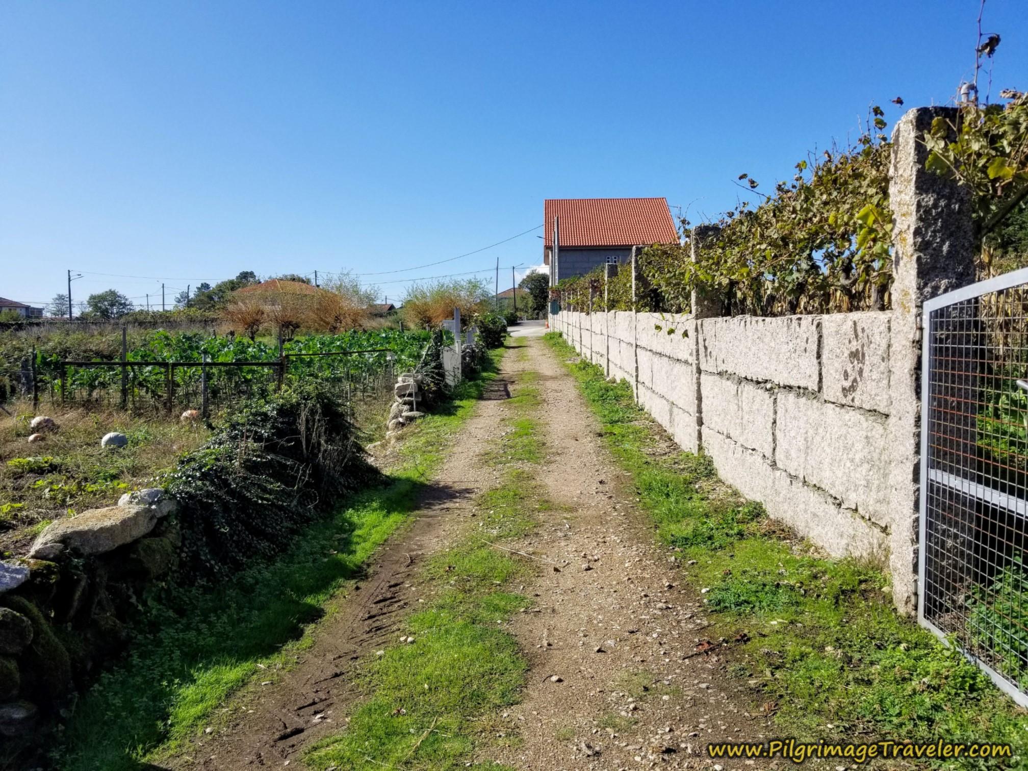 Entering Casas Novas, Camino Sanabrés, Ourense to Cea