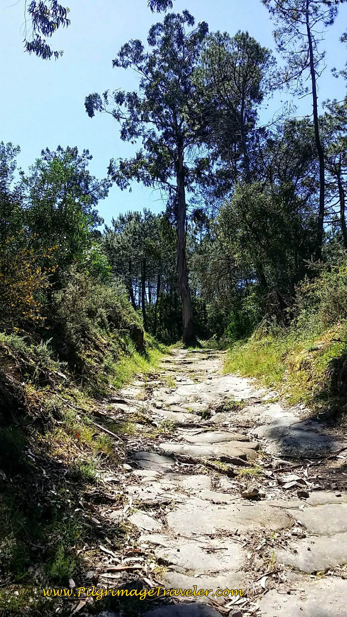 Another Ancient Road Section on day seventeen of the Portugese Way