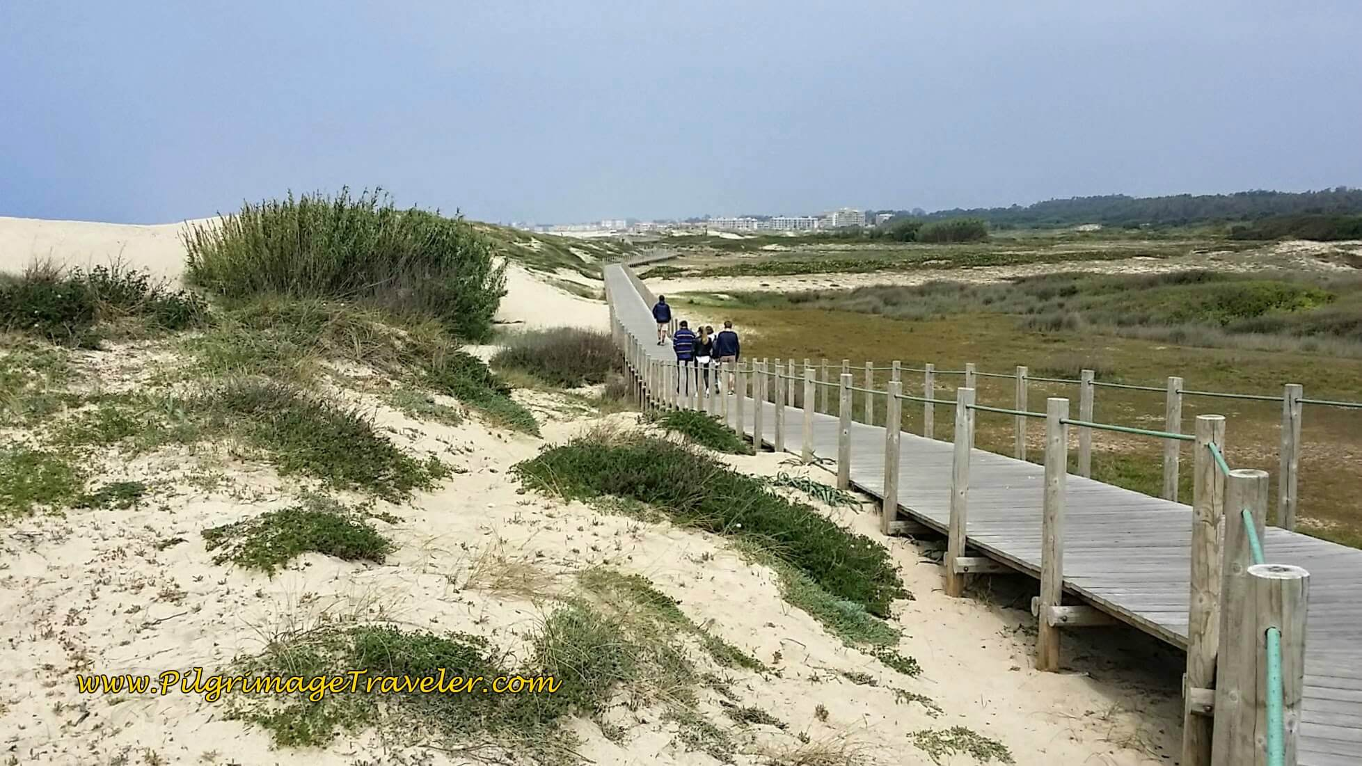 Through the Dunes of the Litoral de Vila do Conde e Reserva Ornitológica on day fifteen of the Camino Portugués on the Senda Litoral