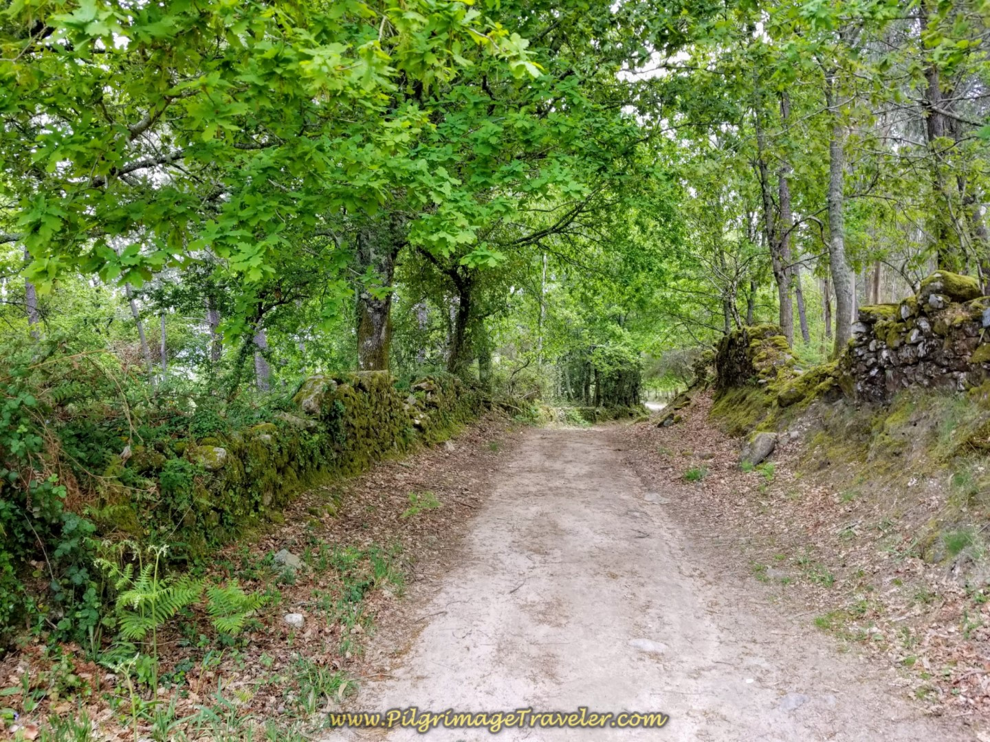 Re-enter the Forest Briefly on day eighteen on the Central Route of the Portuguese Camino