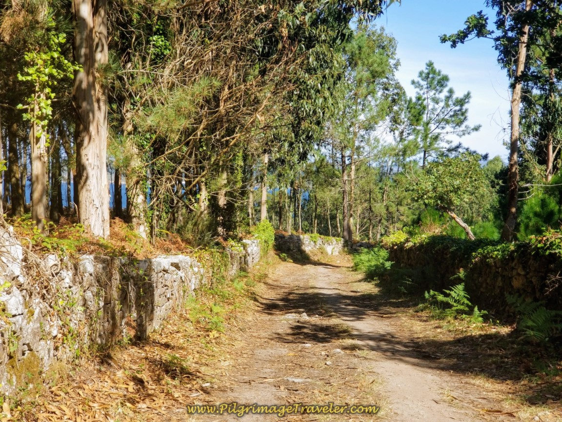 Dirt Road Through Eucalyptus Forest