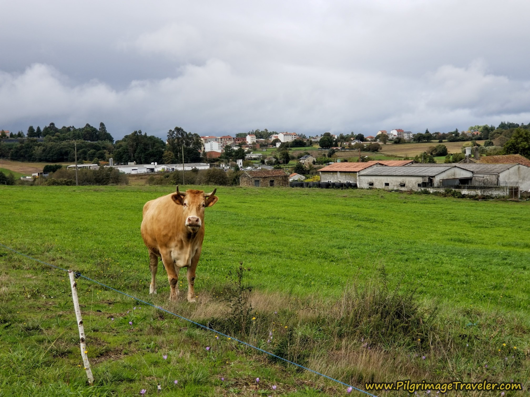 A Cow's Welcome to Chapa