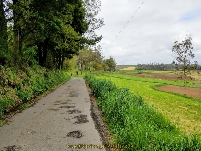 Flat Road Leaves Vilar de Castro