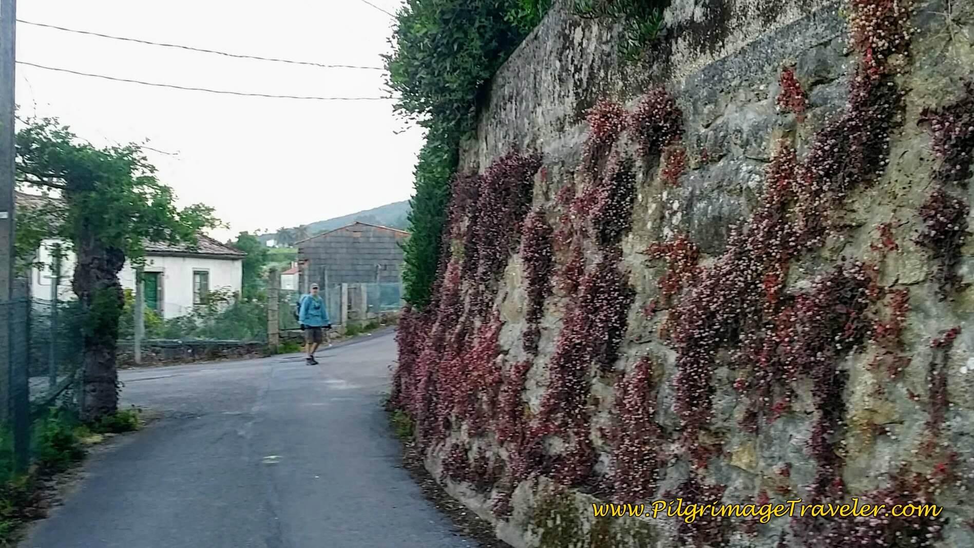 Walk Round This High Wall on Day Twenty-Four, Camino Portugués