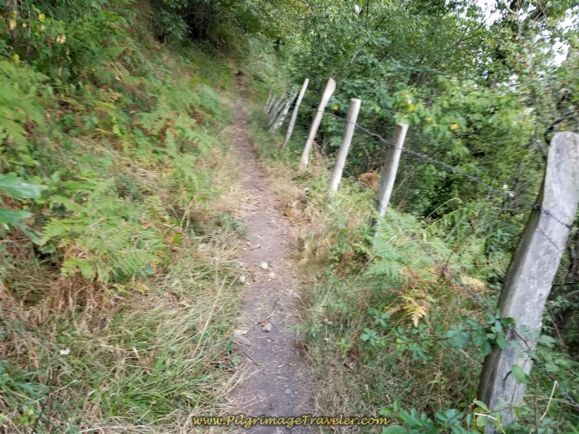 Path Follows a Fence Line on day four of the Camino de San Salvador