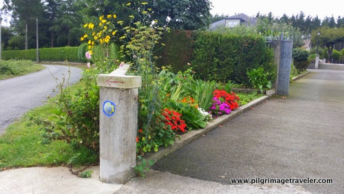 Flowers and a Waymark, Camino Inglés, Spain