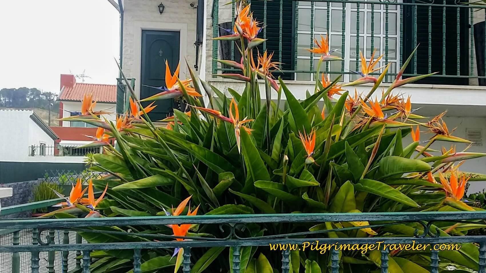 Tropical Bird-of-Paradise