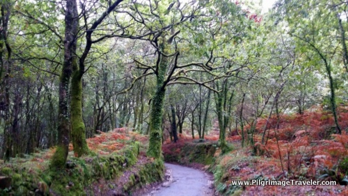 Enchanted Forest along the Camino Finisterre, Galicia, Spain