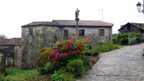 Giant Hydrangeas and a Cruceiro mark the Finisterre Way