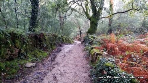 Camino Finisterre, Galicia, Spain