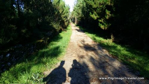 Long Forest Camino, Hospital, Galicia, Spain