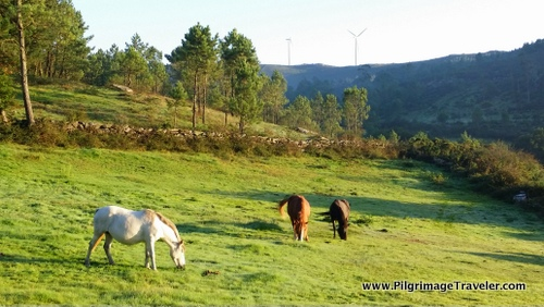 Horses on the Camino Finisterre, Spain