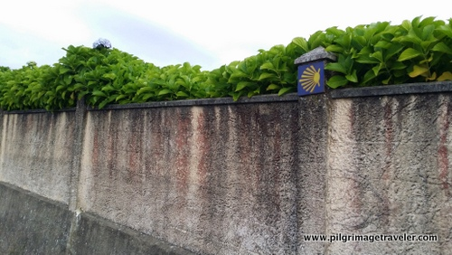 Camino Waymark with Vines on a Wall