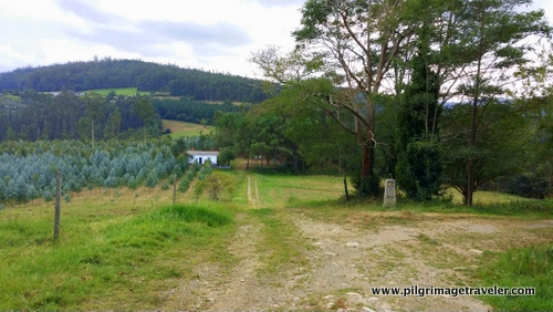Deep Countryside, Camino Inglés, Spain