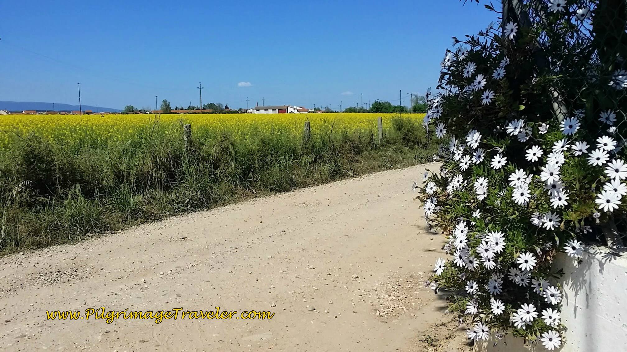 Hot, flat, endless stretches of farmland, walking out of Lisbon on the Camino Portugués