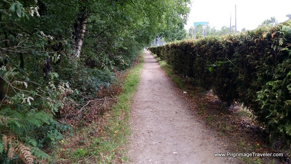 Arzúa Now Close at the Hedge-Lined Path on the French Way