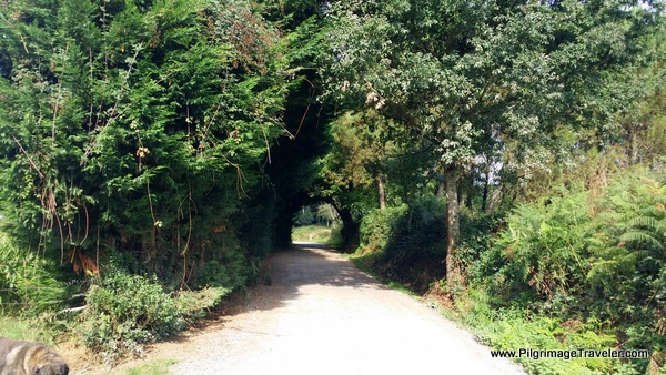 Inviting Tree-lined Off-Road Camino Path, near Melide on the Camino Frances
