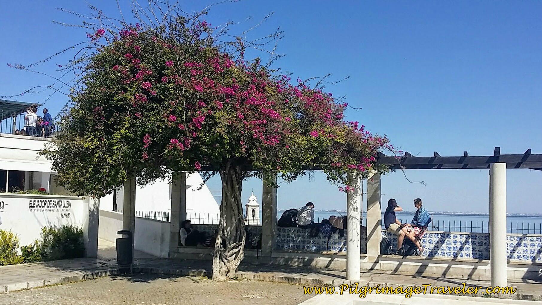 Lookout Terrace at the Miradouro de Santa Luzia