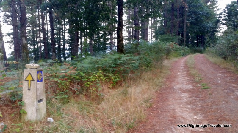 Walking on Forest Paths in Galicia, Spain