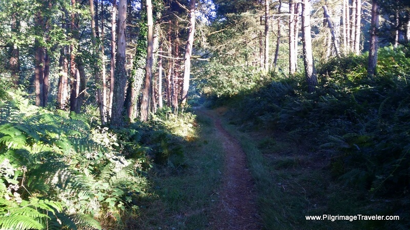 Double Track Turns to Single on the Camino Primtivo