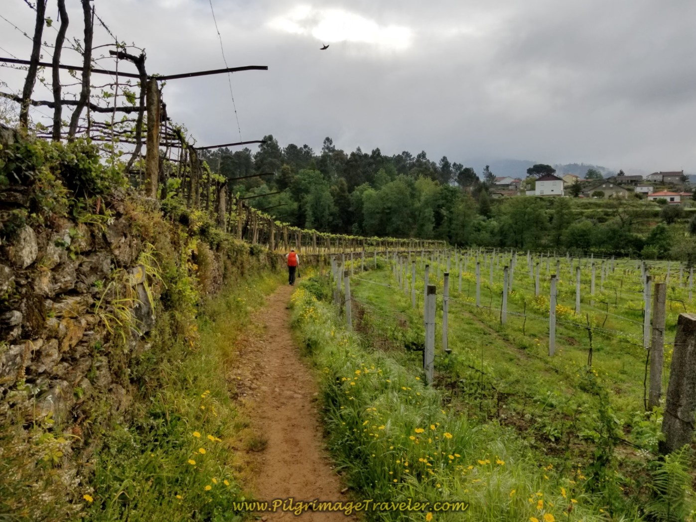 on day eighteen on the Central Route of the Portuguese Camino