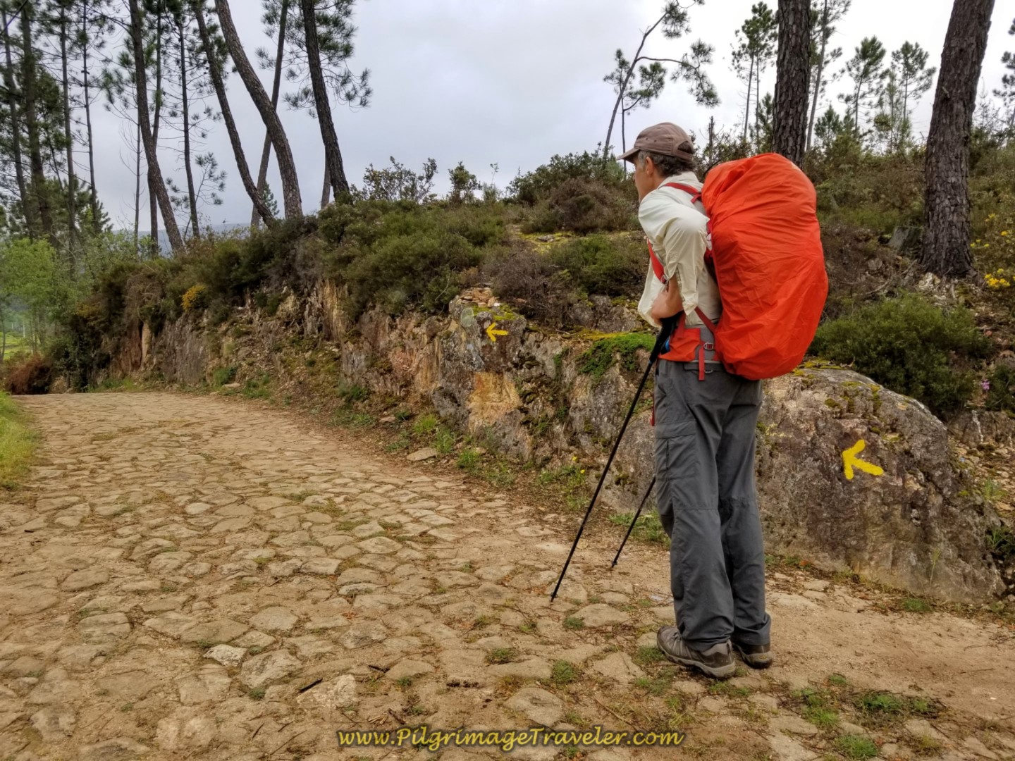 Rich with Yellow Arrows on Cobblestone Road on day eighteen on the Central Route of the Portuguese Camino