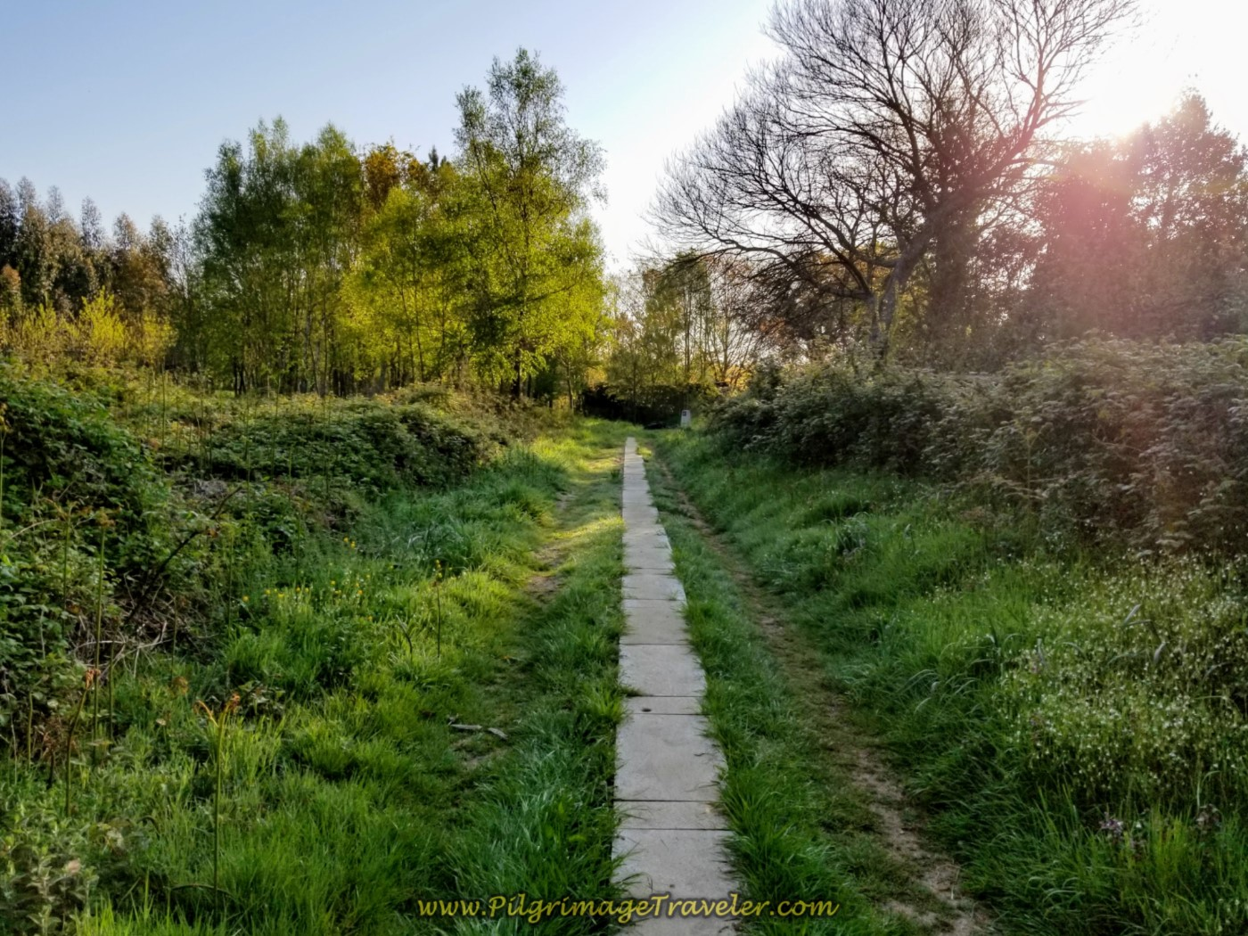 Lane Turns to Concrete Path on day seven of the Camino Inglés