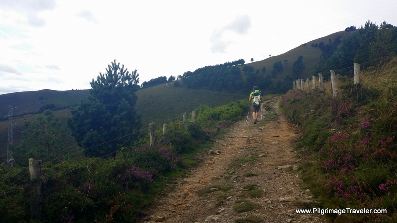 Fewer Trees as the Altitude Increases on the Hospitales Route