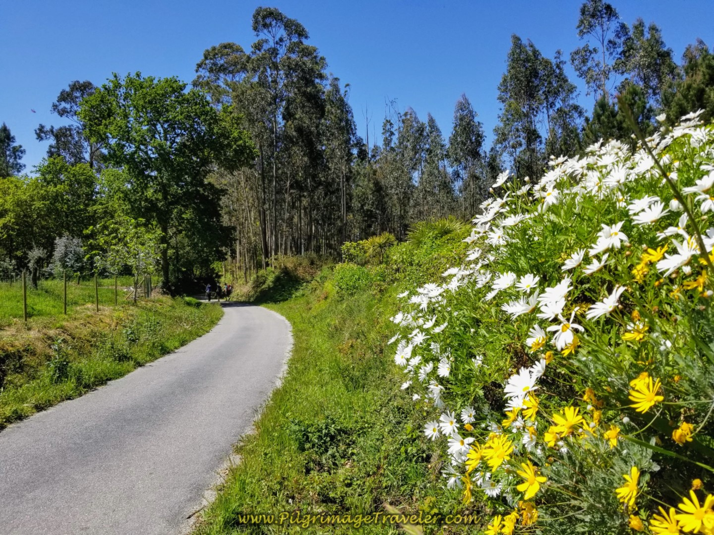 Flowers Bloom Along the road in Lugar O Rombo on day five of the Camino Inglés