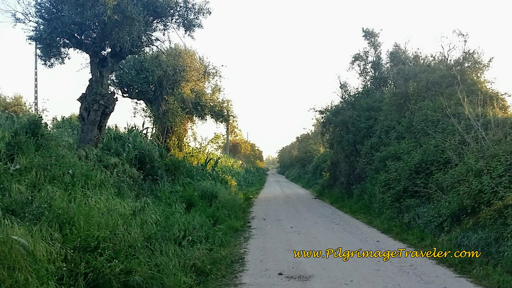 Unnamed, Paved and Quiet Country Road waling out of Golegã