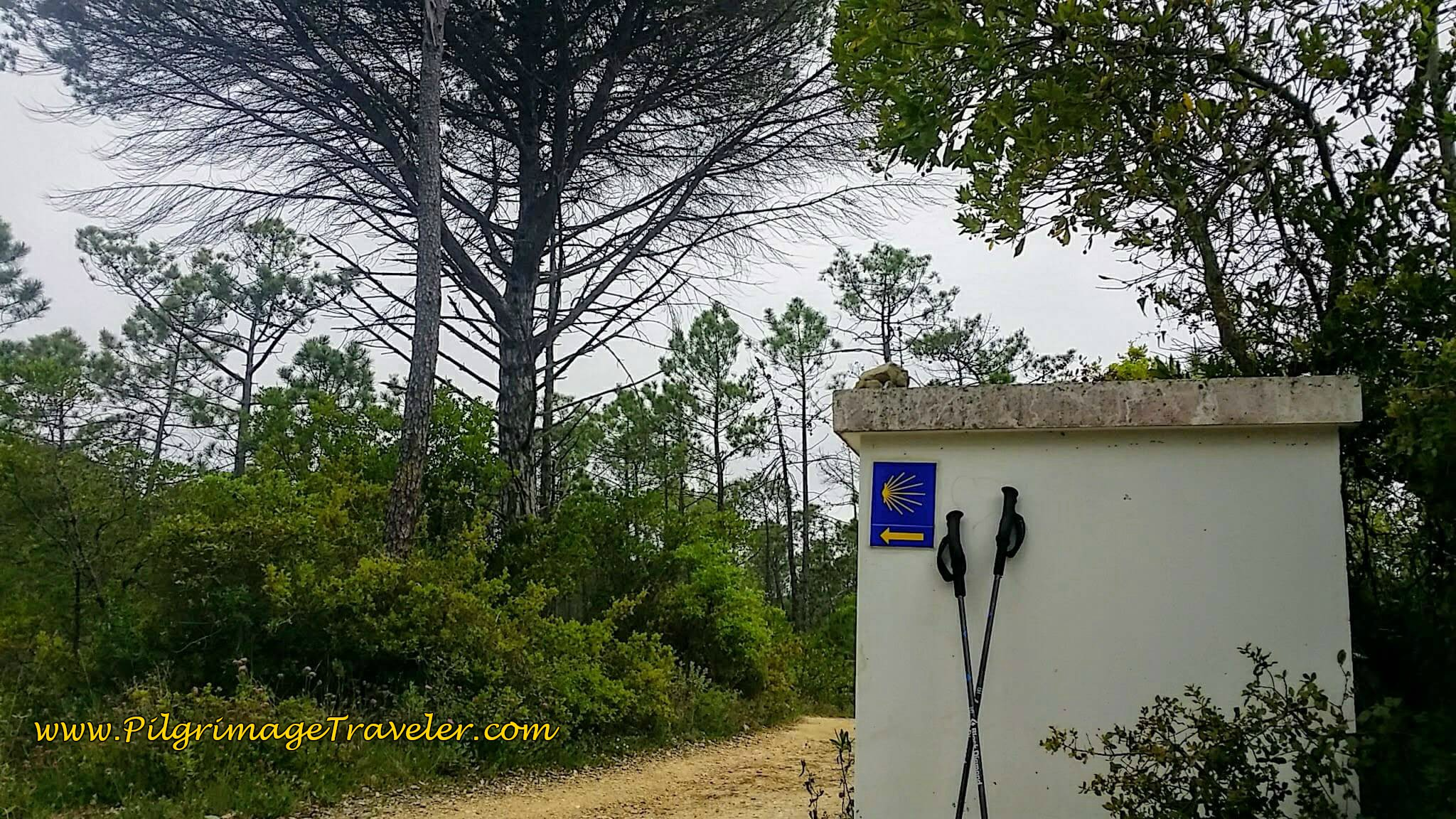 Forest Lane, Rua Canto on day nine of the Portuguese Way