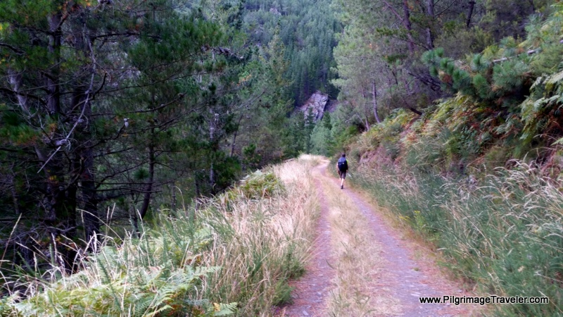 The Forest Path Levels Out near the Embalse de Salime, Asturias, Spain