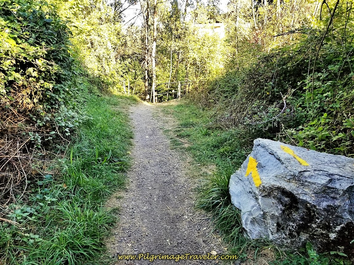 Road Becomes Forest Path on day two of the Camino de San Salvador